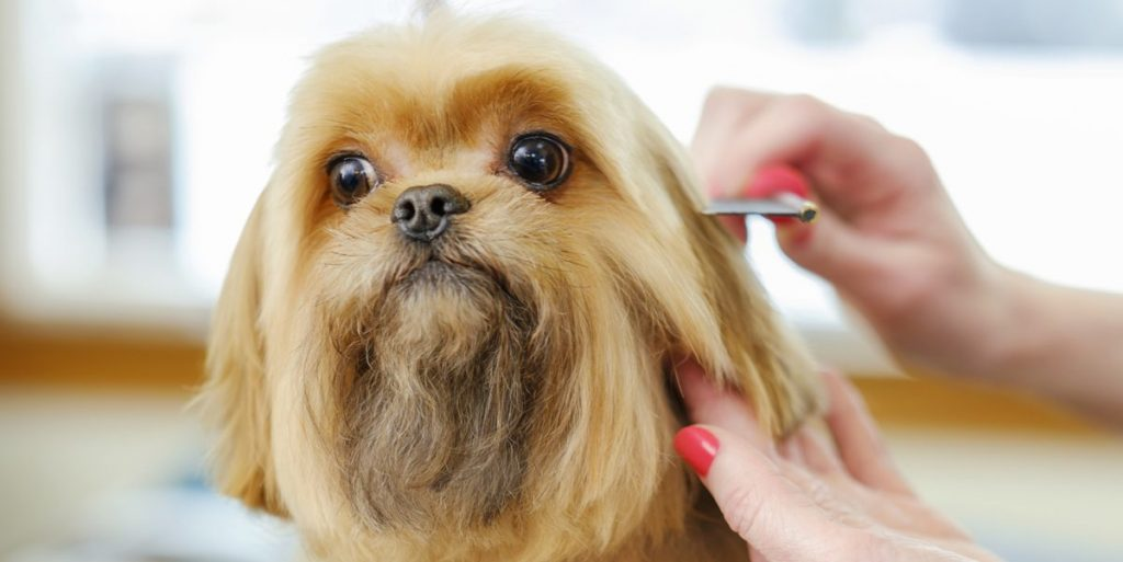 Professional Dog Grooming Petbeing