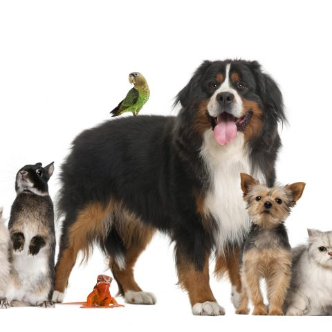 Petbeing group of pets