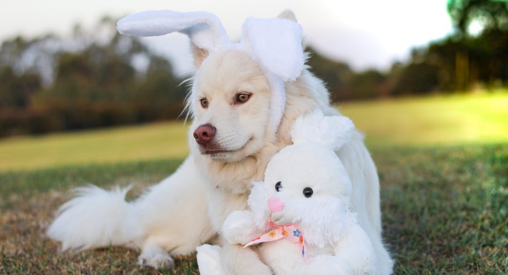 petbeing easter dog