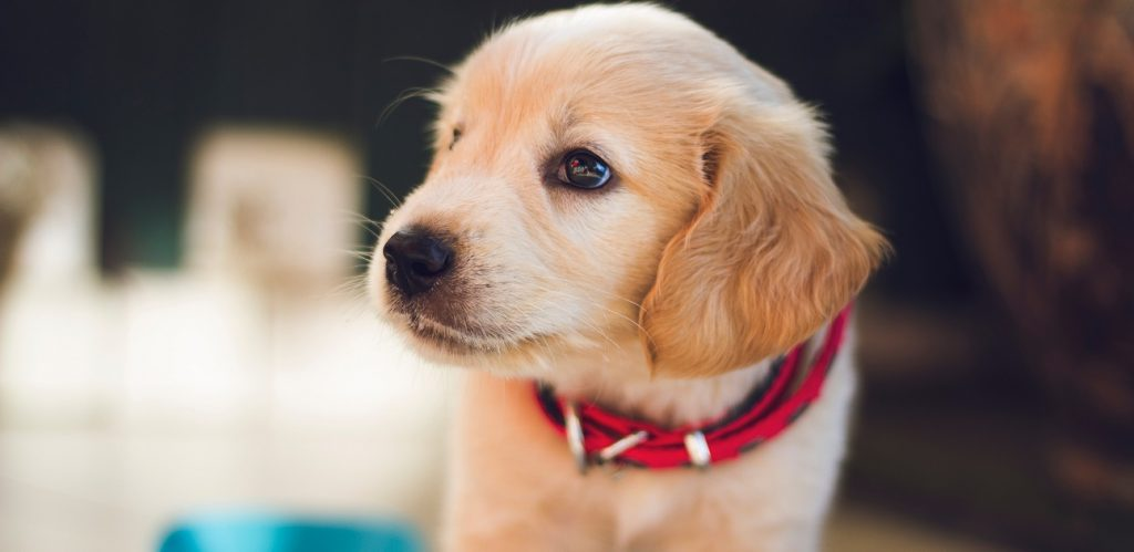 National puppy day 2018 petbeing blog